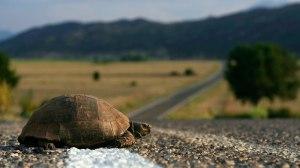 turtlecrossingroad