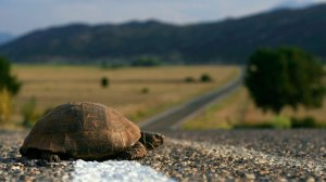 turtlecrossingroad