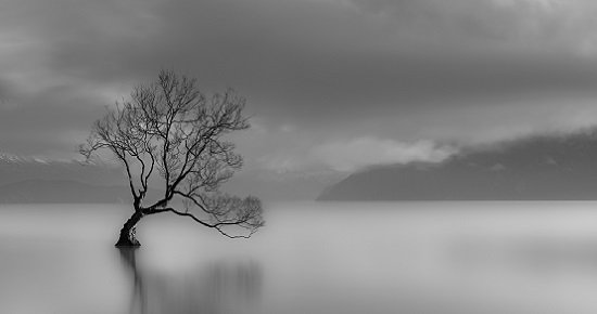 Lone tree, Lake wanaka, New Zealand (black and white)