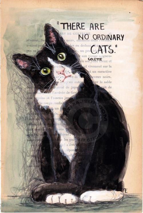 Muse Cat